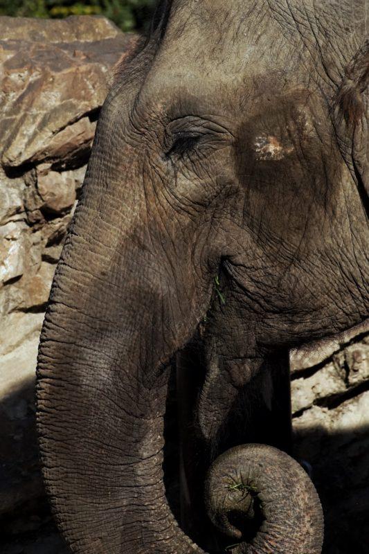 上野動物園2020年1月3日ゾウ